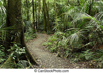 Tropical forest jungle - Lush foliage in tropical jungle