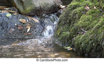 stream stones and moss nature scene