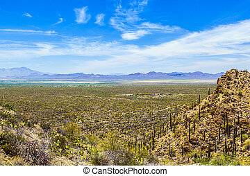 beautiful mountain desert landscape with cacti near Tuscon,...