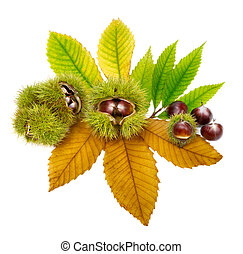 Fresh chestnuts on leaves, isolated - Isolated studio shot...