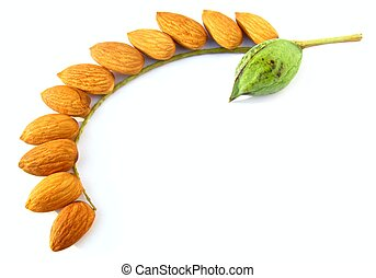 raw green almond with alomnd nuts - Image of raw green...