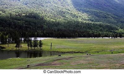 pasture 33 - pasture