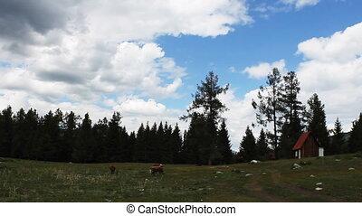 pasture 18 - pasture