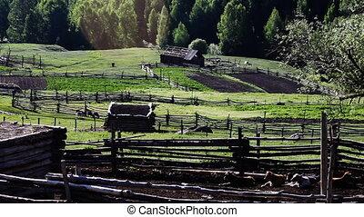 pasture 47 - pasture