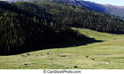 pasture 43 - pasture