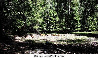 pasture 63 - pasture