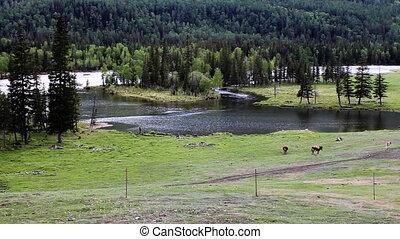 pasture 32 - pasture