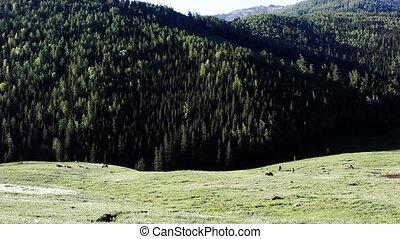 pasture 42