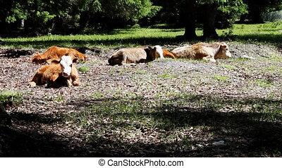 pasture 65 - pasture