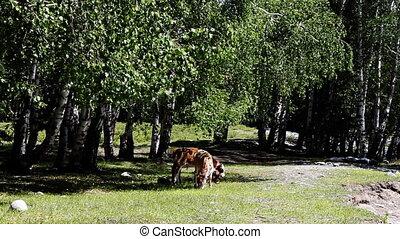 pasture 66 - pasture
