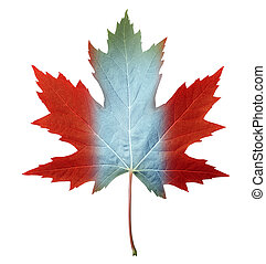 Canada Maple Leaf - Canada maple leaf with the canadian flag...