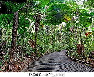 trail fan palm rain forest