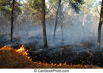 Heat Waves Cause Bush Fires - Burning forest scene caused by...