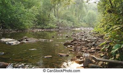 Forest Creek Landscape 03 - Forest Creek, natural landscape....