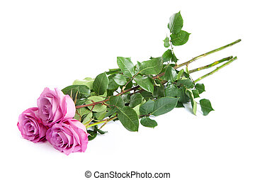 Three fresh pink roses over white background - Three fresh...
