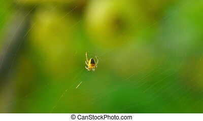 Yellow spider waiting for his victim. Macro.