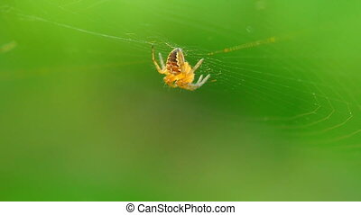 The spider sits on center of the web.