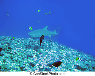 Sharks over a coral reef