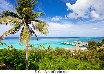 Moorea island landscape - Beautiful coast and over water...