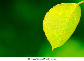 Fresh green leaf