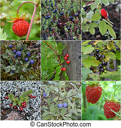 collage from wild berries
