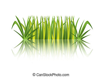grass vector - green grass with refletion over white...