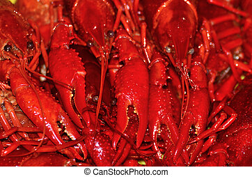 Crawfish Boil - A boiled Louisiana crawfish