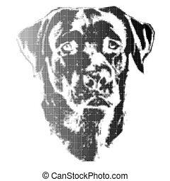 Head of dog, labrador retriever