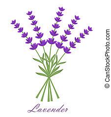 Lavender flowers bouquet. Vector illustration