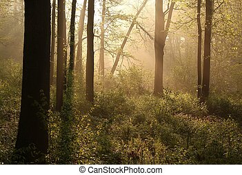 Misty spring forest at sunrise - Sunlight entering the lush...