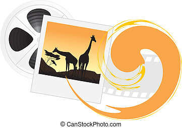 Photo of giraffes and film objects