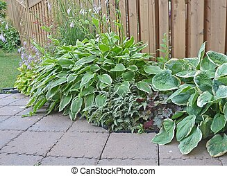 Shady plants - closeup of a flowerbed filled with plants for...
