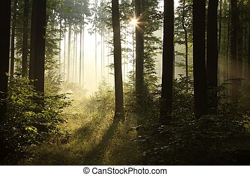 Sunrise in a misty forest