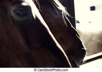 Two horses - Close-up photo of two horses in stable