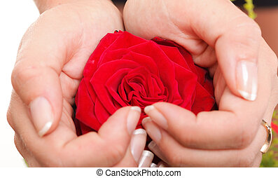 Woman hands heart with rose petals - Woman hands heart with...