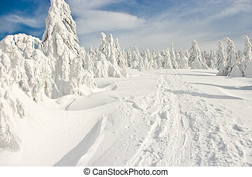 Forest covered by snow on big mountain