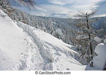 Path in the mountains during the winter
