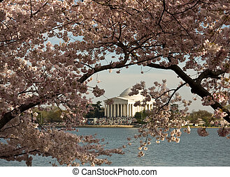 Jefferson Memorial framed by Cherry Blossom - Jefferson...