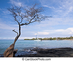 Hawaiian Bay with Tree and Boat - Overview of Hawaiian Bay...