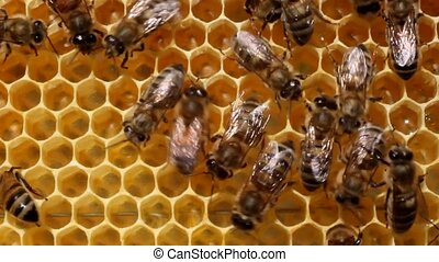 Bees build honeycombs Material is a wax that they produce...