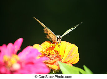 butterfly on flower - butterfly with yellow wings on a...