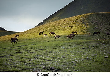 Herd of horses pasturing in mountain place