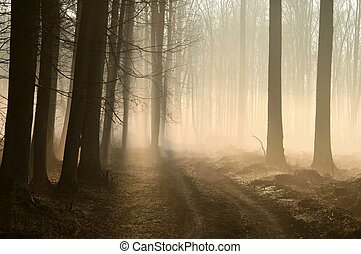 Early spring forest at dawn