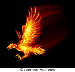 Flaming Hawk Illustration on black background for design