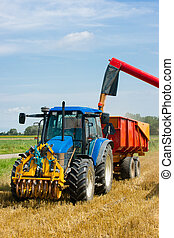 Harvesting wheat during the end of summer - A...
