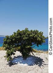 mastic, árbol, grecia
