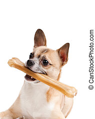 Doggy with bone, isolated on white