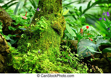 Tropical Rainforest Landscape