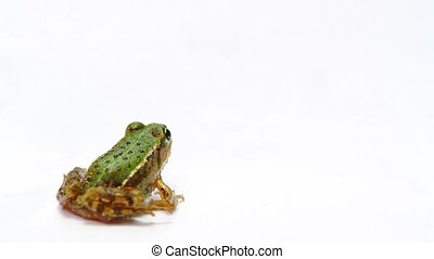 Frog on a white