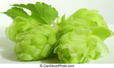 hops on white